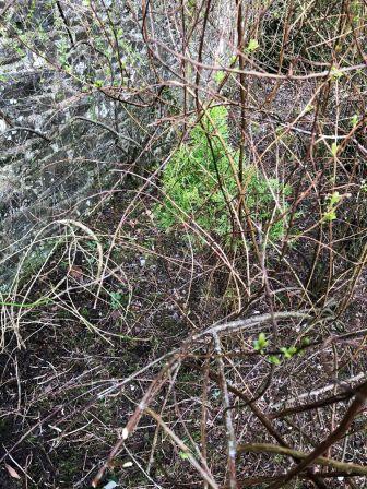 Herb border 6 - 29032020