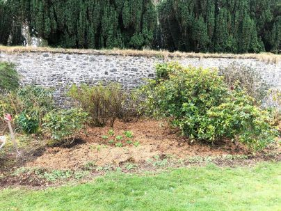 Mulched Whod bed - 12042020