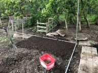 New fruit cage 2 - 17062020