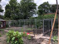 New fruit cage 3 - 19062020