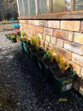 Replanted box - 18042020