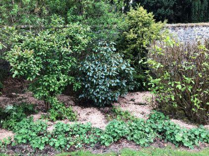 Rhod garden - 09052020