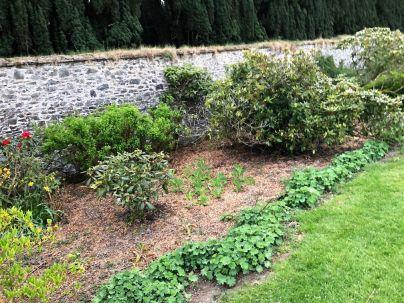 Rhod garden 4 - 09052020