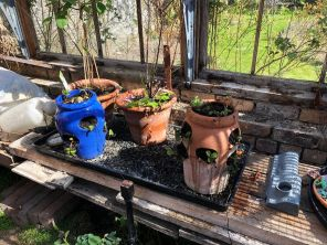 Strawberry planters - 18042020