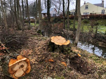 Tree felled 1 - 29022020