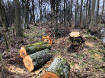Tree felled 2 - 29022020