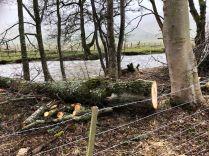 Tree felled 3 - 29022020