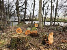 Tree felled 4 - 29022020
