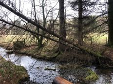 Trees down across river - 26012020