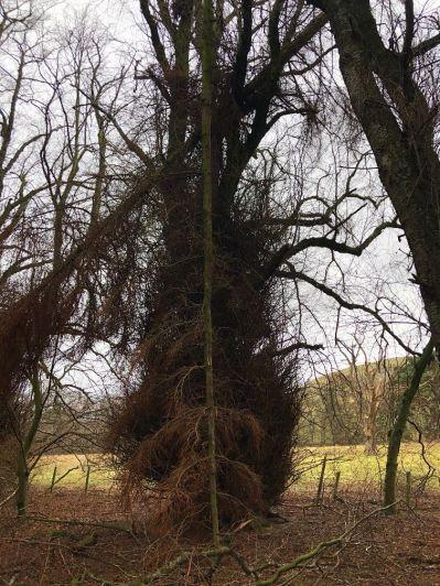 Upside down tree - 26012020