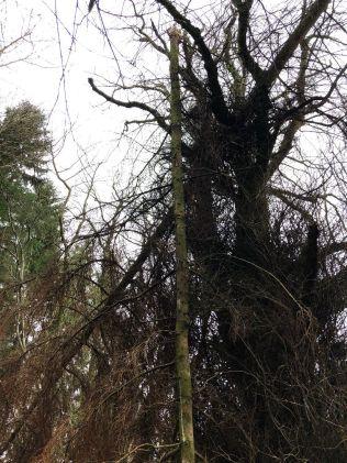 upside down tree 3 - 26012020