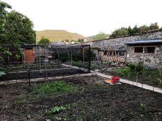 Veg garden 2 - 08062020