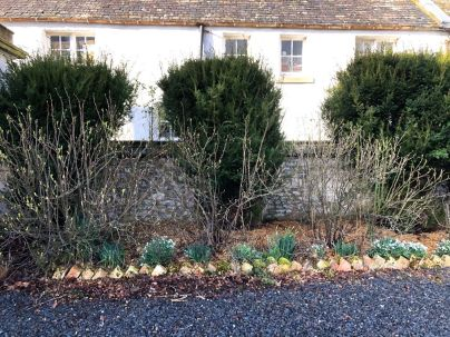 Yew trees at front - 29022020